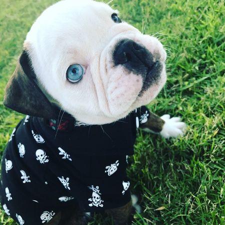 Mammal Pet Collar Puppy Outdoors Day Close-up Grass Animal Themes