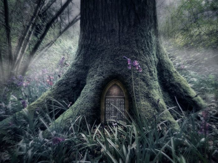 Edit Photo Art Art Fairytale  Fairy Door Magical Whimsical Moody Green Color Moss Nature Plants And Flowers Dreamy Dream Surreal Tree Flower Low Section Tree Trunk Plant Close-up Growing Purple Color In Bloom Plant Life