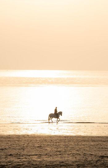 Silhouette man riding horse on beach