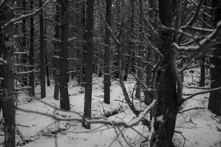 Dark Dark Places Snow ❄ Cold Creepy Creepy Places Dark Forrest Feel The Cold Breeze. Forrest Scary Snowy Forrest Tranquility Tree