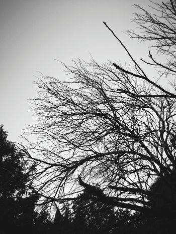 Nature No People Sky Outdoors Bird Silhouette