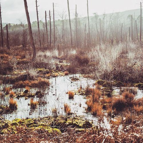 Prehistoric Pool Delamere Delamereforest Nature Outdoors