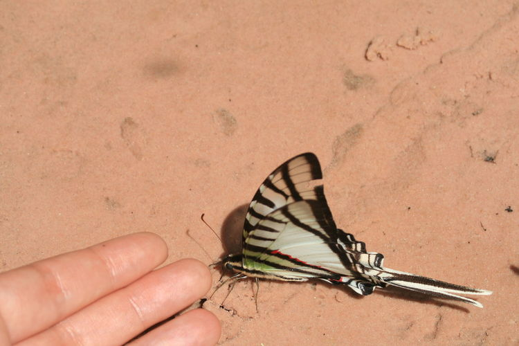 Cropped image of hand touching butterfly on sand