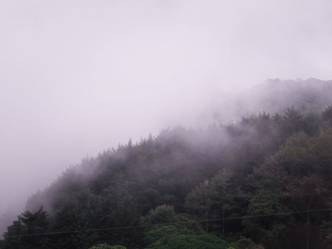 Tree Fog Mountain Forest Pinaceae Sky Pine Tree No People Outdoors Nature Dawn Cold Temperature Landscape Day Beauty In Nature Tree Area Freshness Morning Cloud - Sky Mountain Peak