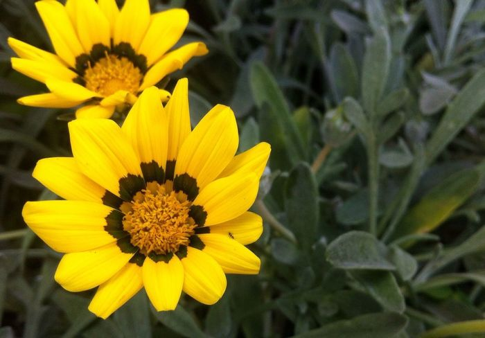 Depth Of Field Mohammedia Morocco Flowers