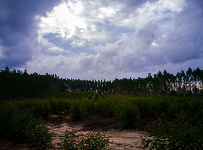 Nature view Cloud - Sky Sky Plant Beauty In Nature Environment Tranquil Scene Tranquility Land Landscape Tree Scenics - Nature Nature Growth Day No People Field Outdoors Non-urban Scene Grass Forest
