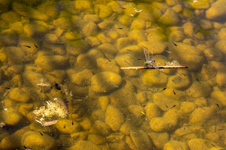 Dragon Fly In Macro Water Transportation Nature Nautical Vessel Mode Of Transportation Day Lake Waterfront Outdoors Travel Adventure Air Vehicle Yellow Sport People Flying Two People
