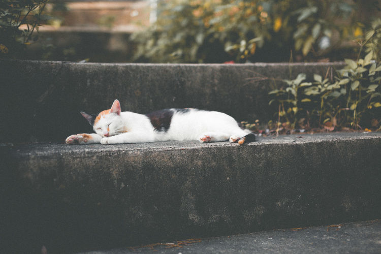 sleep 💤💤💤 Cat Enjoying Life EyeEm Taiwan Photo VSCO Vscocam VSCO Cam Photoshoot Photos