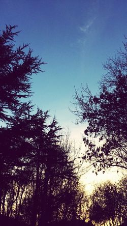 Tree Nature Tranquility Low Angle View Growth Sky Beauty In Nature Silhouette No People Outdoors Scenics Tranquil Scene Day Treetop