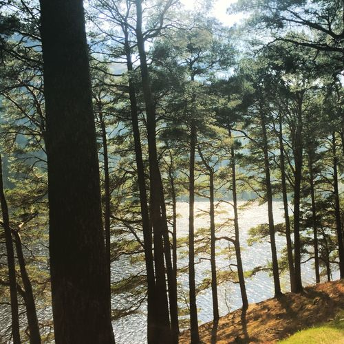 Glendalock Wicklow Lake View Trees Trees Great Day Out Daydreaming Great View Water Water_collection Colorful Color Portrait Colors Let Get Losted IPhoneography Amazing View Lostinthought