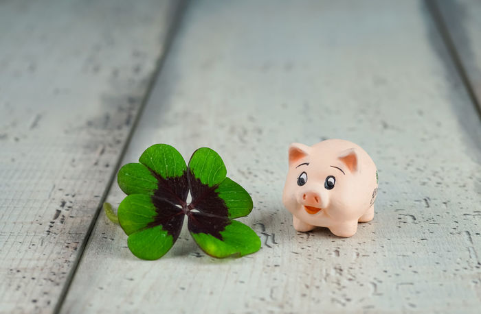 Close-up Cloverleaf Day Fortune, Four-leafed Green Color Happy, Holidays Indoors  Leaf Life Lucky Charm Lucky, New Year No People Pig Silvester Symbol Table Talisman