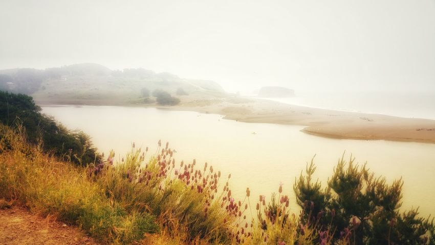 Foggy morning. Ocean Overlook. Zen Mist Foggy Background White Copy Space Meditation Timeless Moment Golden Surreal Water Fog Tree Lake Beauty Sky Landscape Plant Idyllic Atmospheric Mood Coast Tranquil Scene Calm Wildflower Scenics Dramatic Sky Countryside Overcast Tranquility