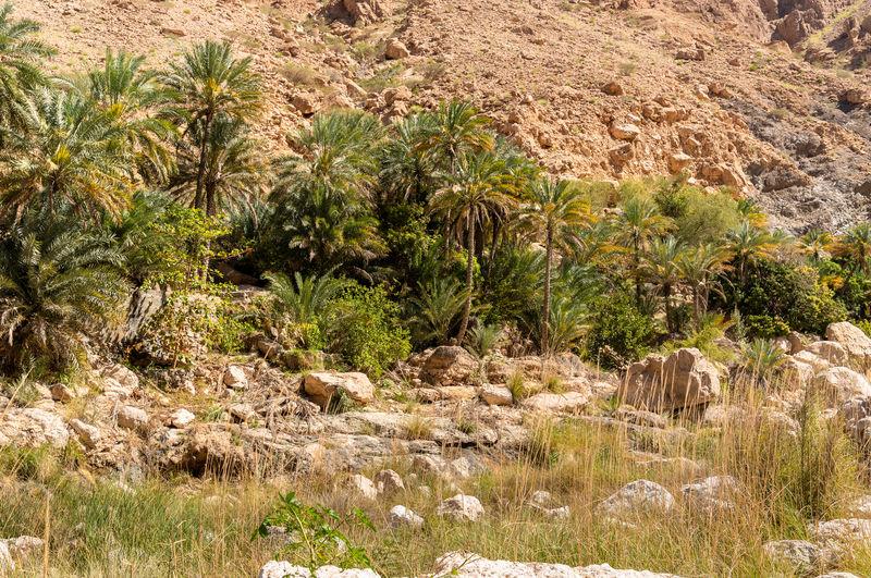 Plants growing on rocks