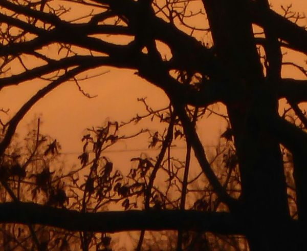 Sundown Through A Tree Silhouette Beauty In Nature Orange Color A Sight That Warms My Heart At Frosty Temperatures Beauty In Nature Love That View Tranquility Tranquil Scene Cold Temperature For My Friends 😍😘🎁 Silhouette Silhouette Photography View From My Window😍 Sunsetlover Sunsetphotographs EyeEm Best Shots - Sunsets + Sunrise