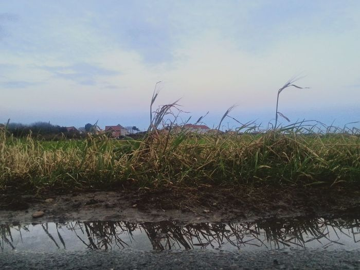 Scenic view of field against cloudy sky