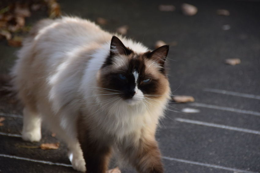 Uh oh evil 😈 look One Animal Animal Themes Domestic Animals Pets Mammal Domestic Cat Cat Whisker Feline Focus On Foreground Day Zoology Stray Animal Outdoors Footpath Animal