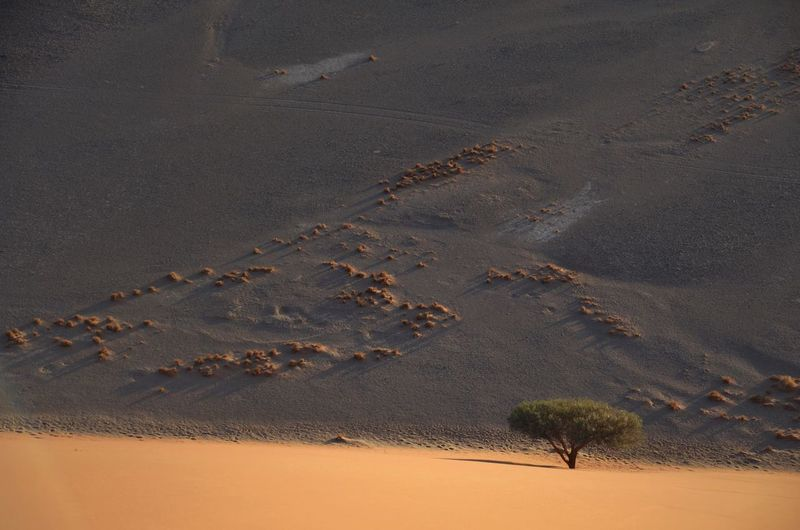 No People Outdoors Landscape Tree Redsand Namibia Namib Desert Sand Dune Desert