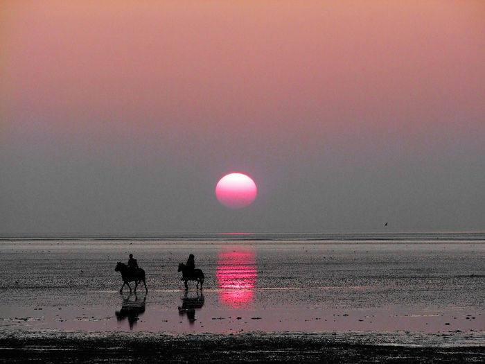 Silhouette Sunset Reflection Pink Color Full Length Beach Water People OutdoorsSunlight EyeEmNewHere Tranquility Adults Only Sky Sea Beauty In Nature Nature Adult Togetherness Only Men Day ElCubano Men Horizon Over Water