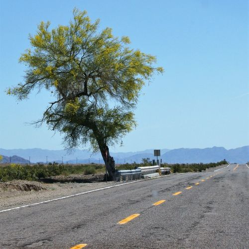 Road by trees against clear sky