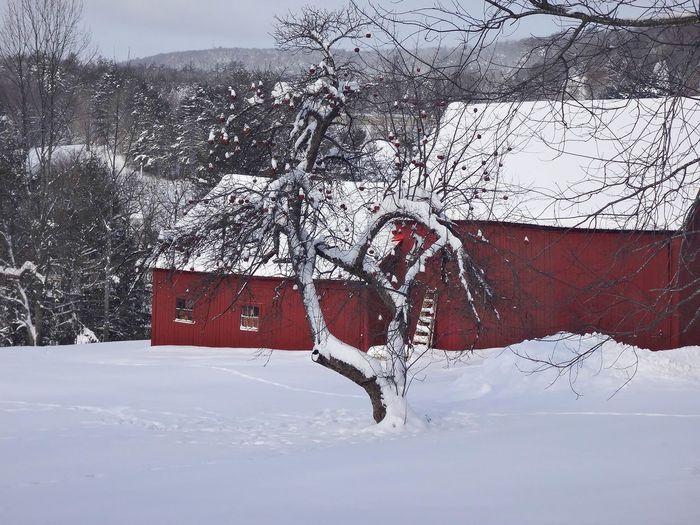 Snow ❄ New Hampshire Enfield Snowing Snow Day Winter Winter Wonderland Snowy Days... It's Cold Outside GayneGirlPhotography Wintertime Cold Blizzard Snow EyeEm Best Shots EyeEm Gallery Eyeemphotography Cold Days Snow Day ❄ Nature Photography New England  BRRRR ❄️ Ice Brrrr! Frozen Nature