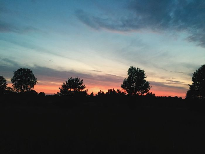 Estonia Pınky Tree Silhouette Plant Sky Sunset Beauty In Nature Tranquility Cloud - Sky Nature No People