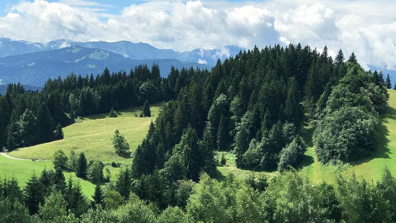 tree, beauty in nature, scenics - nature, plant, tranquil scene, green color, tranquility, growth, mountain, cloud - sky, non-urban scene, sky, nature, no people, day, land, landscape, idyllic, environment, foliage, outdoors, pine tree, coniferous tree