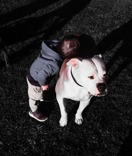 Cuddles Cuddling Child And Dog Mansbestfriend Family Family Life American Bulldog Best Dog Ever Toddler  Toddlerlife Best Friends Child Boy Love Cuddles Park Pets Dog Bulldog Purebred Dog Pet Collar Canine
