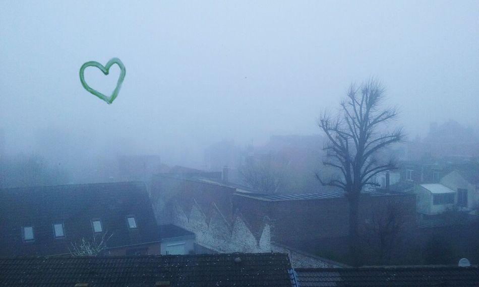 No People Outdoors Sky Fog Tree Nature Lille France Brouillard Matinal