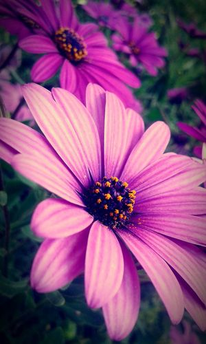 First Eyeem Photo Purple Flower EyeEm Nature Lover Check This Out Hello World Enjoying Life