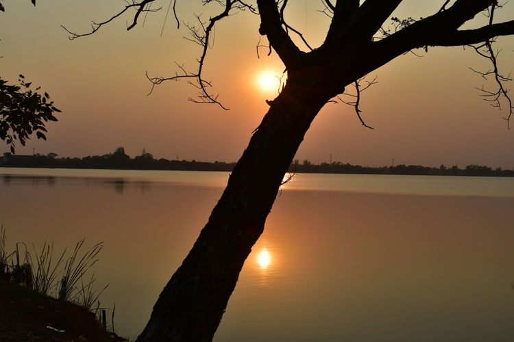 beautiful calm lake surface during sunset Beauty In Nature Evening Nature No People Outdoors Reflection Scenics Silhouette Sky Sunset Sunset Behind A Tree Sunsetting Behind A Tree On Lake Bank Sunsetting On Water Tranquil Scene Tranquility Tree Tree By The Lake Water