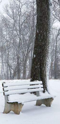Waiting Alone No People Solitude And Silence Bench Benches & Branches Bench In The Woods Bench Seat Tree Snow Cold Temperature Winter Branch Sky Snowfall Snowing Scenics Non-urban Scene Tranquility Snowflake Tranquil Scene