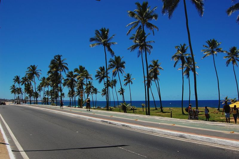 Palm trees on roadside by sea against blue sky during sunny day