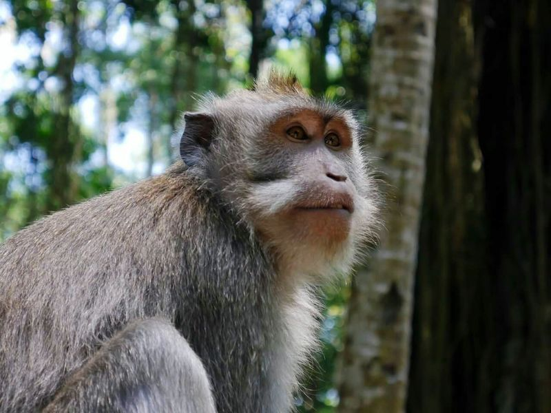 Monkey Forest Monkey Intense Gaze Wild Zoo Animal EyeEm Gallery Eyeemanimals Fresh On Eyeem