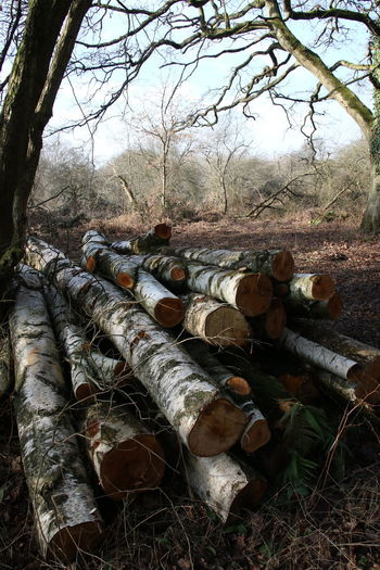 Branch Day Deforestation Environmental Issues Forest Large Group Of Objects Log Nature No People Outdoors Pile Of Logs Sky Stack Timber Tree Tree Trunk Woodpile