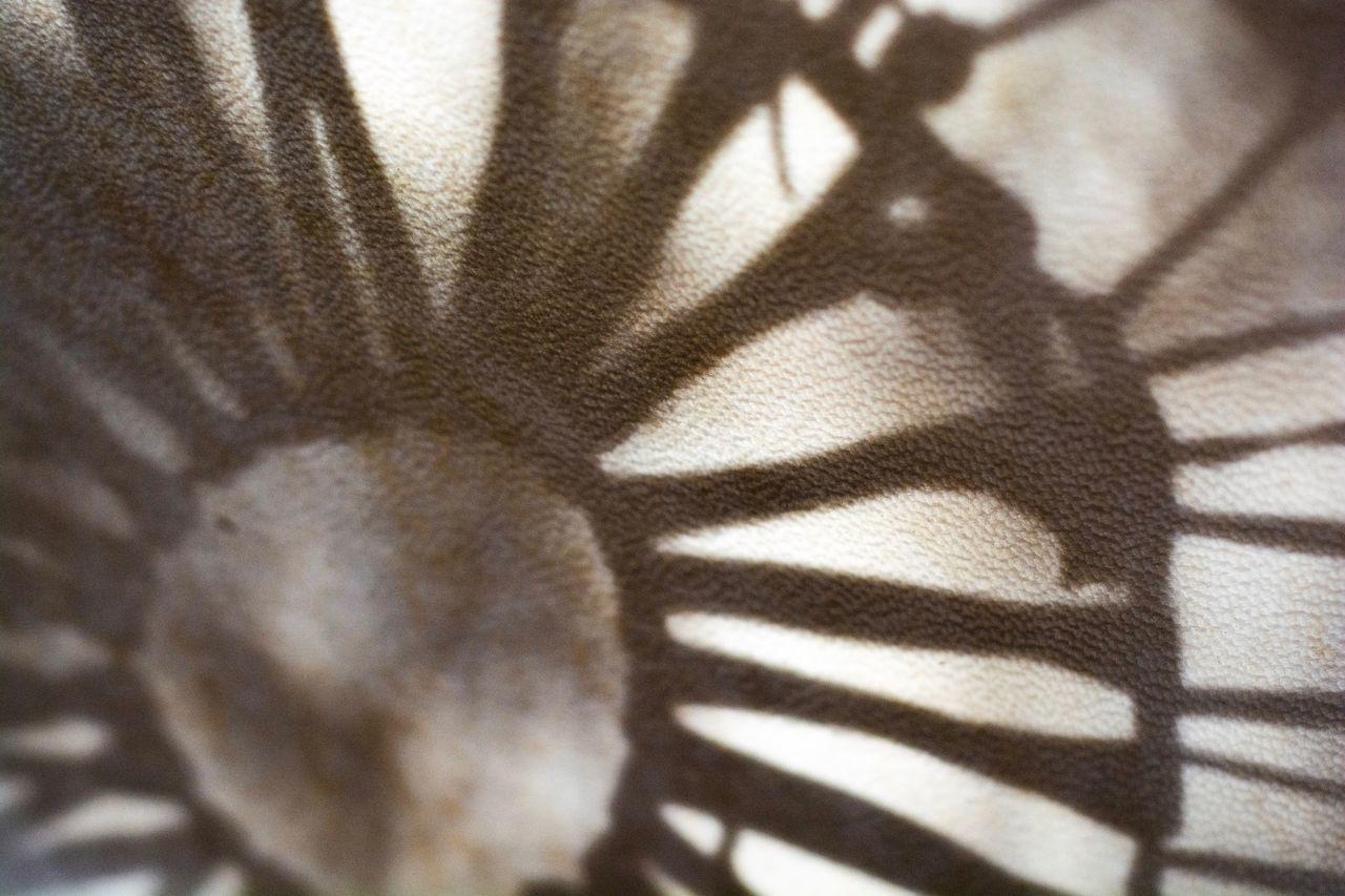 HIGH ANGLE VIEW OF SHADOW ON ZEBRA