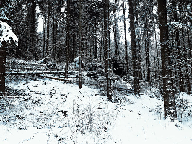 Beauty In Nature Cold Temperature Day Forest Landscape Nature No People Outdoors Snow Tree Winter