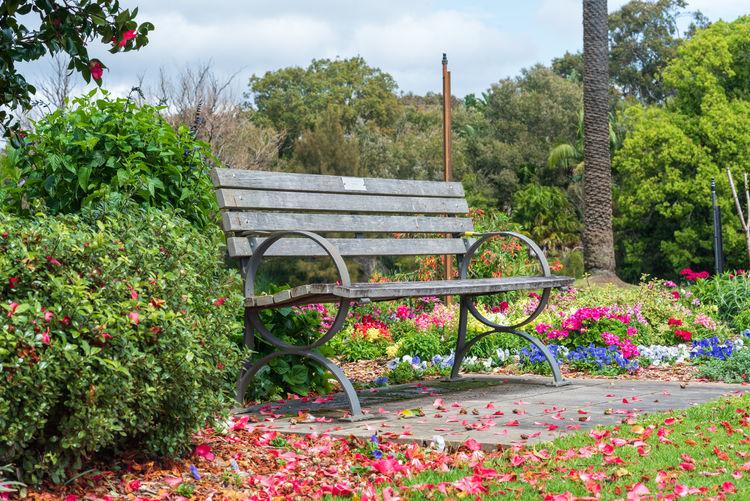 View of park bench in garden