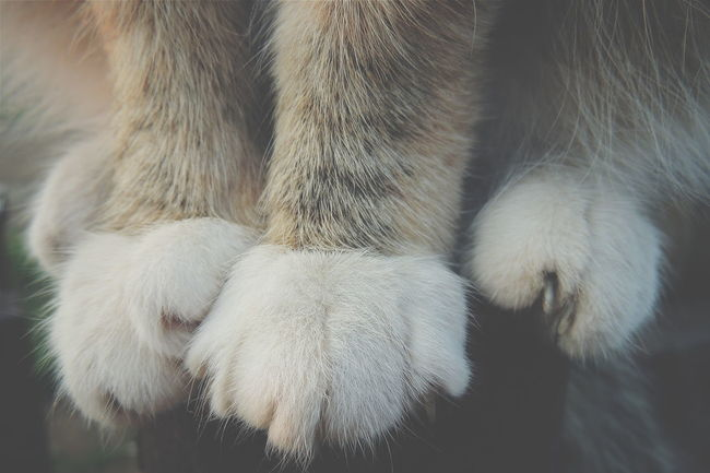Nature Summer Contry Beautiful Nature Rest & Relax Beauty In Nature Macrophotography Macro World Macro_collection Macro Macro Cat Photo Cat Lovers Cat Paw