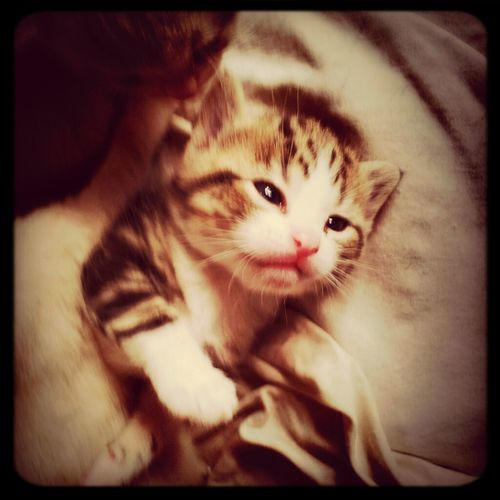 Litlle Babycat