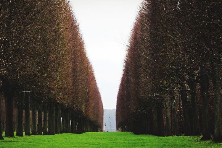 Landscape Versailles France Europe Nature Green Blue Sky Symmetry
