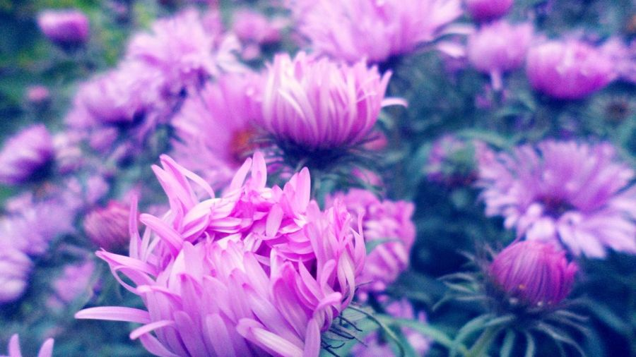 Flowers Flower Flower Collection Autumn Gently Nature Naturelovers Nature Photography EyeEm Nature Lover Nature_collection