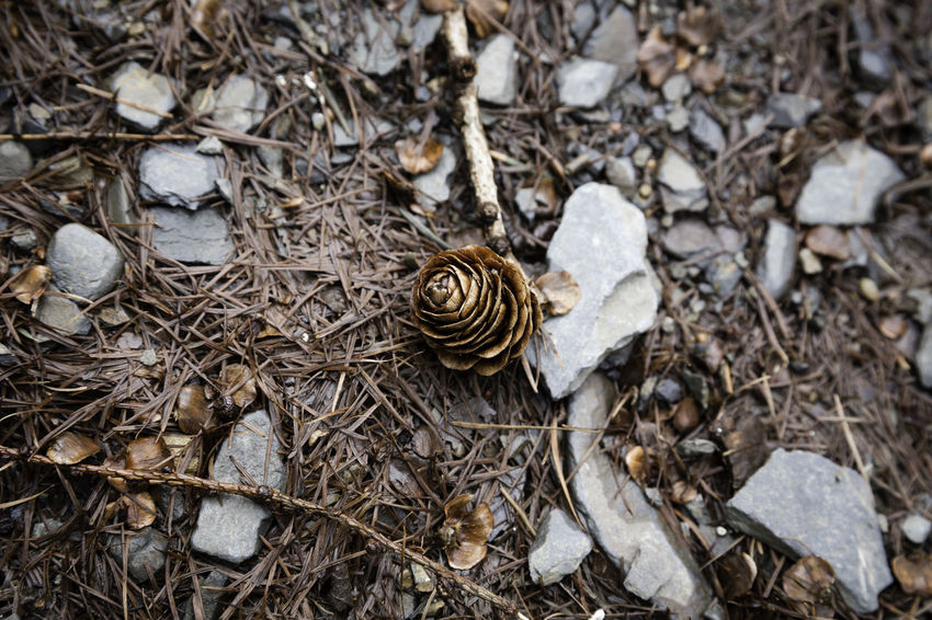 'Lone Pine Cone' Alone Pine Beauty In Nature Brown Close-up Cone Dry High Angle View Macro Natural World Nature No People On The Path Outdoors Pine Cone Single Object Singular Slate