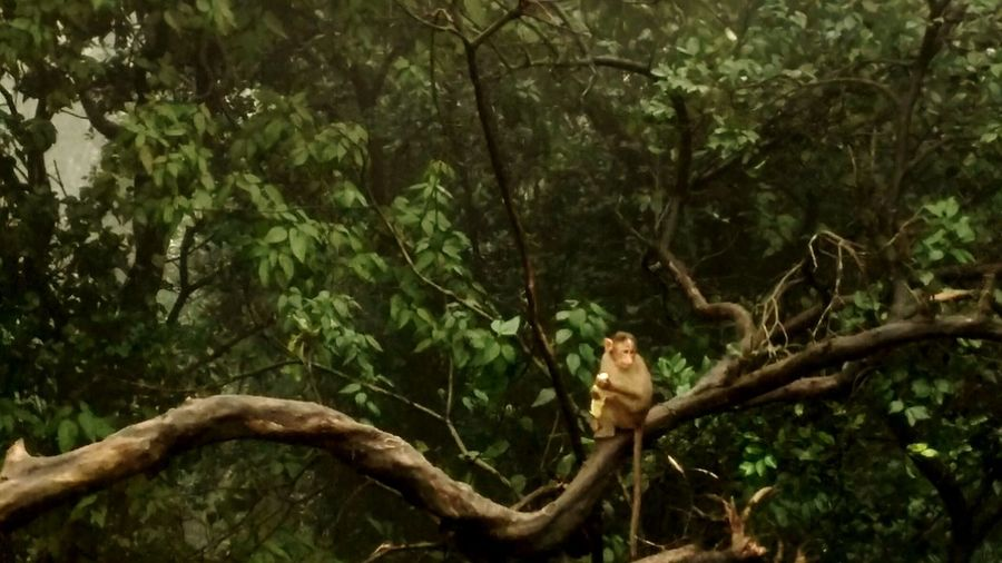Monkey Eating Forest Green Nature Monsoonseason Corn Tree Environment Animal