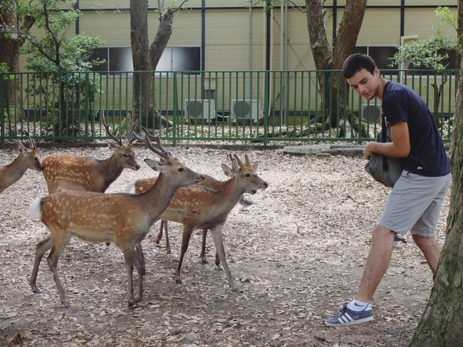 Animals Love ♥ Feeding  Tourism Outdoors One Person Day Japan Photography Japanese Style Animal Themes Japan