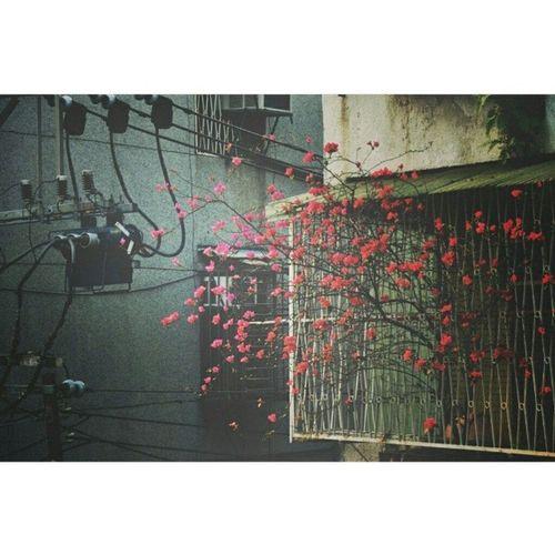 14 03 18 Tuesday 每天早上看見對面婆婆種的花心情都好好 ? ? ? Morning Flowers Inagoodmood opposite
