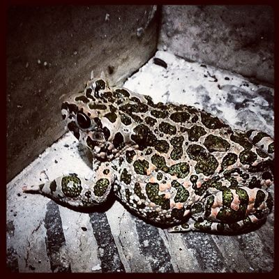 Instacool Instabest Frog Night animal green inmyplace bestshot