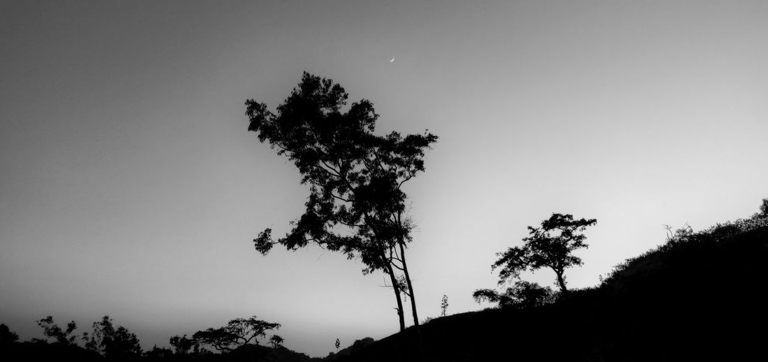 Low angle view of silhouette trees against sky at night