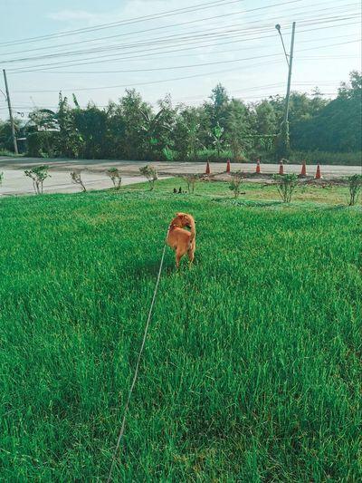 View of dog on grassy field