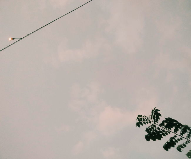 Sore di Coklat Klasik Bird Sky Close-up Cloud - Sky Flamingo Telephone Line Freshwater Bird Colony Beak Power Line  Water Bird Phone Cord Preening Wading Bolivia Animal Neck Telephone Pole Spread Wings Butterfly - Insect Seagull Flock Of Birds Dragonfly Perching Squirrel