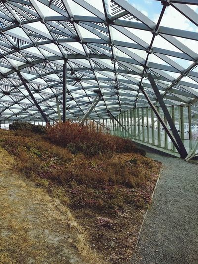 Greenhouse Plant Nursery Architecture Sky Plant Built Structure Skylight Building Atrium Architectural Detail Agricultural Field Architectural Feature Interior Buddhist Temple